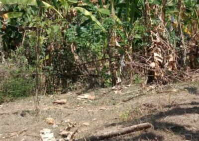 254658-very-cheap-land-for-sale-idr-35000000-100m2-3-794
