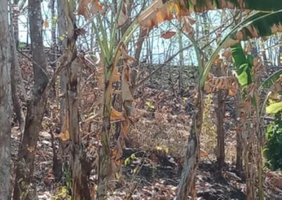 254658-very-cheap-land-for-sale-idr-35000000-100m2-5-794