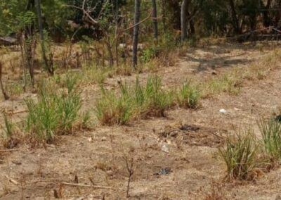 254867-idr-50000000-100m2-land-for-sale-in-lovina-kaliasem-3-794