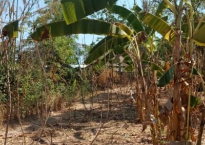 255086-land-for-sale-only-2km-from-central-lovina-4-794