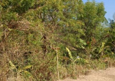 255086-land-for-sale-only-2km-from-central-lovina-5-794