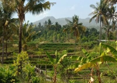 255353-mountain-view-land-for-sale-in-lovina-1-794