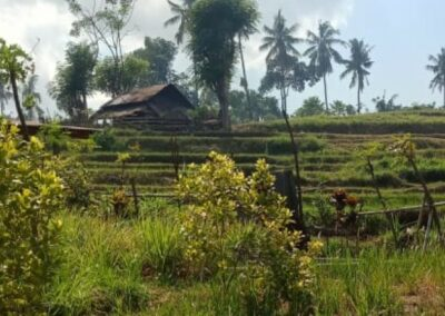 255353-mountain-view-land-for-sale-in-lovina-10-794
