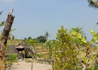 255353-mountain-view-land-for-sale-in-lovina-11-794