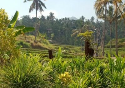 255353-mountain-view-land-for-sale-in-lovina-2-794