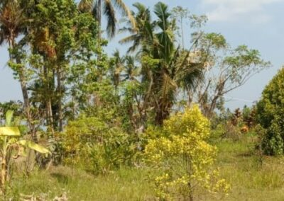 255353-mountain-view-land-for-sale-in-lovina-3-794