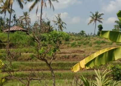 255353-mountain-view-land-for-sale-in-lovina-4-794
