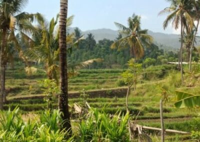 255353-mountain-view-land-for-sale-in-lovina-5-794