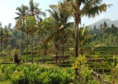 255353-mountain-view-land-for-sale-in-lovina-6-794