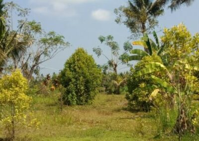 255353-mountain-view-land-for-sale-in-lovina-7-794