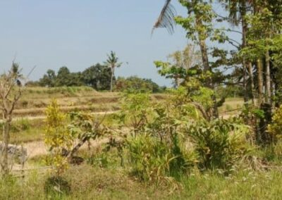 255353-mountain-view-land-for-sale-in-lovina-8-794