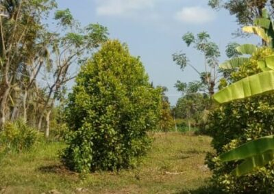 255353-mountain-view-land-for-sale-in-lovina-9-794