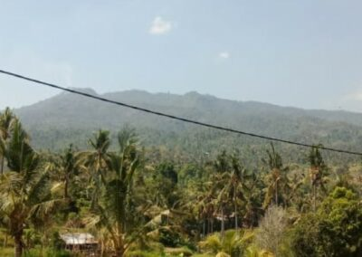 255361-land-with-rice-field-view-for-sale-3-794