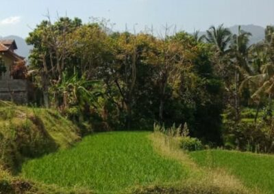 255361-land-with-rice-field-view-for-sale-4-794