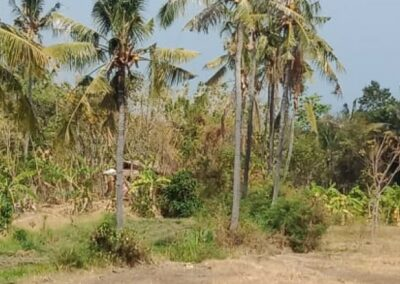 255361-land-with-rice-field-view-for-sale-7-794