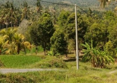 255380-land-for-sale-with-rice-field-view-in-lovina-1-794