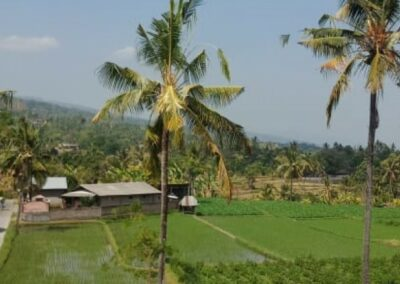 255380-land-for-sale-with-rice-field-view-in-lovina-2-794