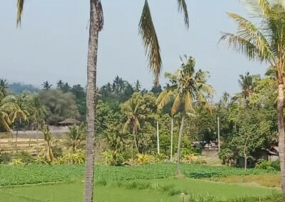 255380-land-for-sale-with-rice-field-view-in-lovina-3-794