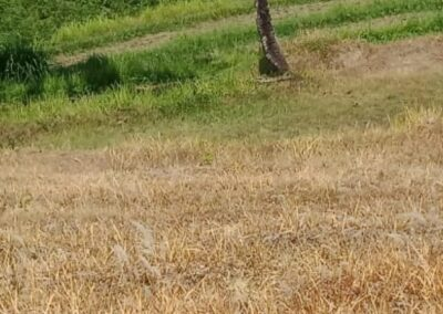 255380-land-for-sale-with-rice-field-view-in-lovina-6-794