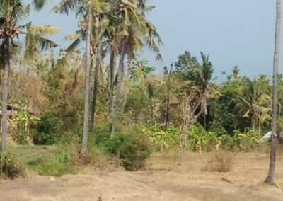 255380-land-for-sale-with-rice-field-view-in-lovina-7-794
