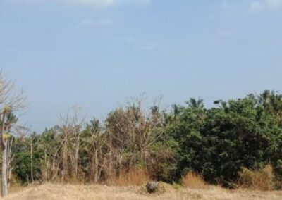 255380-land-for-sale-with-rice-field-view-in-lovina-8-794