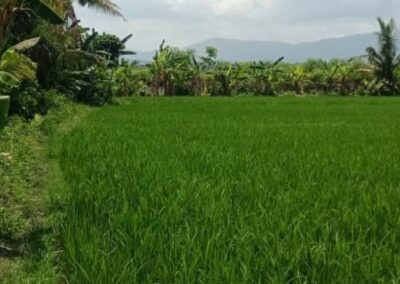 259983-land-for-sale-nearby-the-beach-in-lovina-6-794