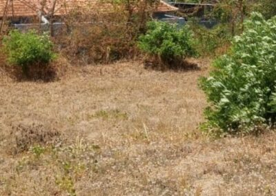 258386-land-for-sale-in-north-bali-5-794