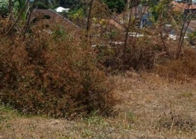 258386-land-for-sale-in-north-bali-8-794