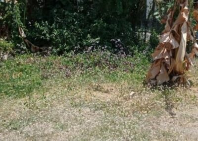 258386-land-for-sale-in-north-bali-9-794